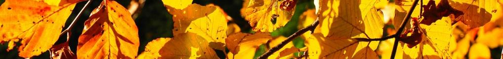 leaves-779763_1280 (1)