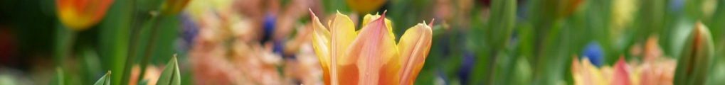 flowers-753134_1280 (2)